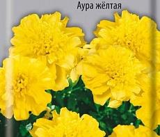 Бархатцы отклоненные махровые Аура желтая